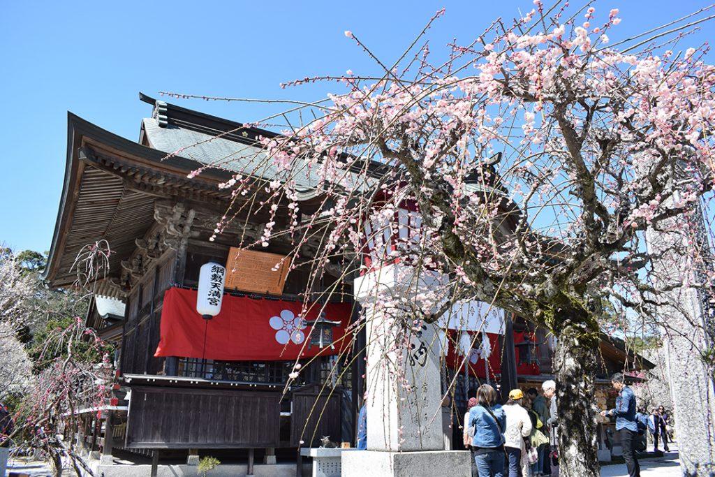 春になると1,000本ほどの梅が咲き誇る綱敷天満宮