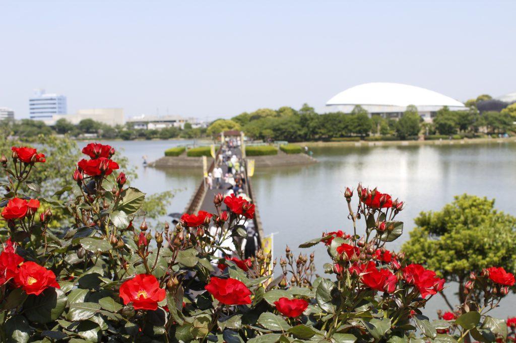 園内には180種約2,400株のバラが咲き誇る