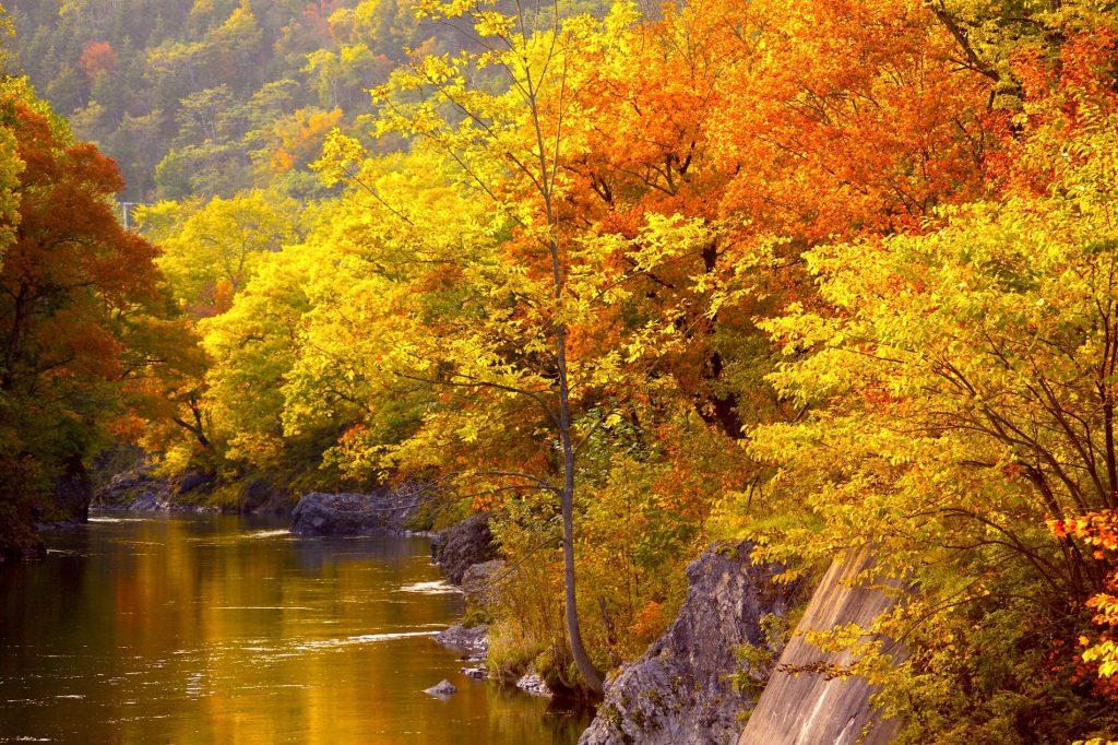 秋に色づく錦仙峡